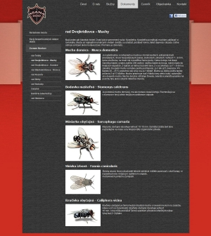 Webpräsentation für ASANA DDD s.r.o.